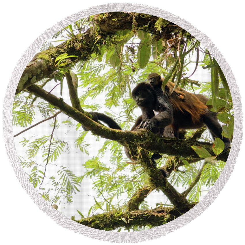 Howler Monkey Round Beach Towel featuring the photograph Howler Mother And Child by Natural Focal Point Photography