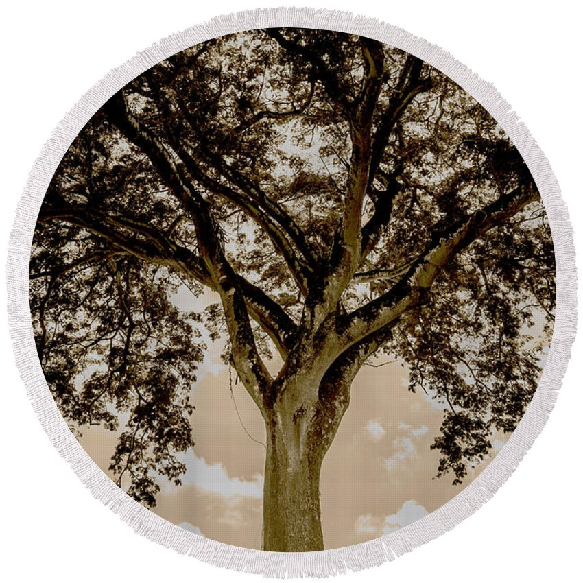 Black And White Round Beach Towel featuring the photograph Huge Tree 11 by Totto Ponce