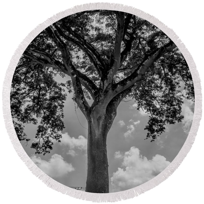 Black And White Round Beach Towel featuring the photograph Huge Tree 12 by Totto Ponce