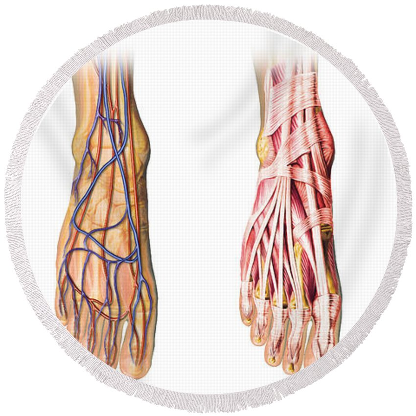 Human Foot Anatomy Showing Skin Veins Round Beach Towel For Sale By