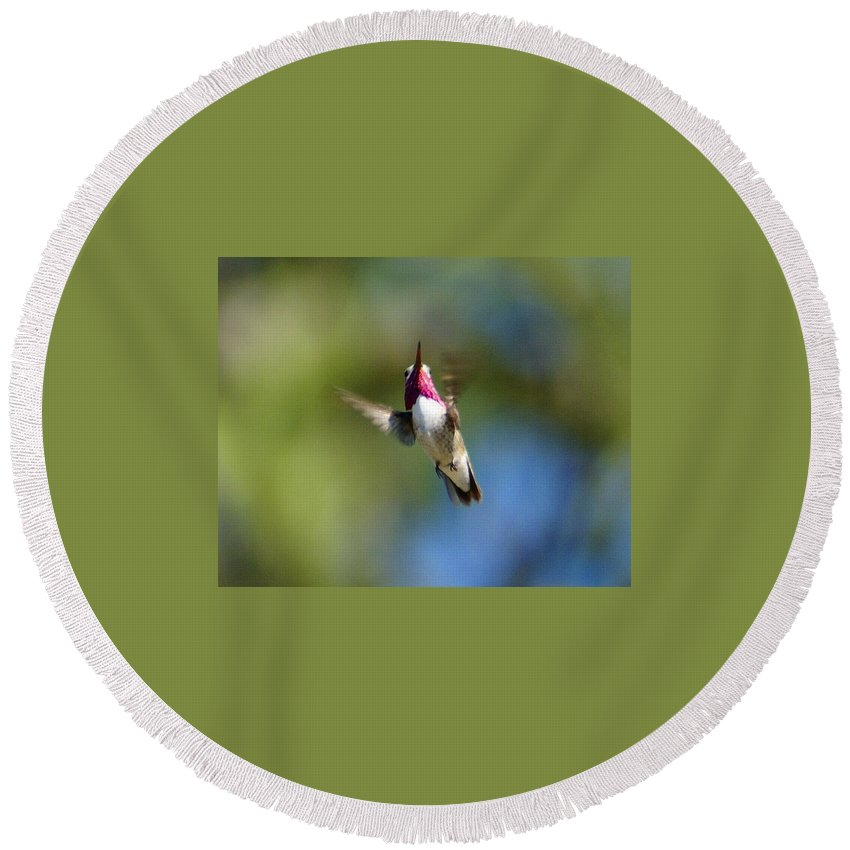 Spokane Round Beach Towel featuring the photograph Hummer In Flight by Ben Upham III
