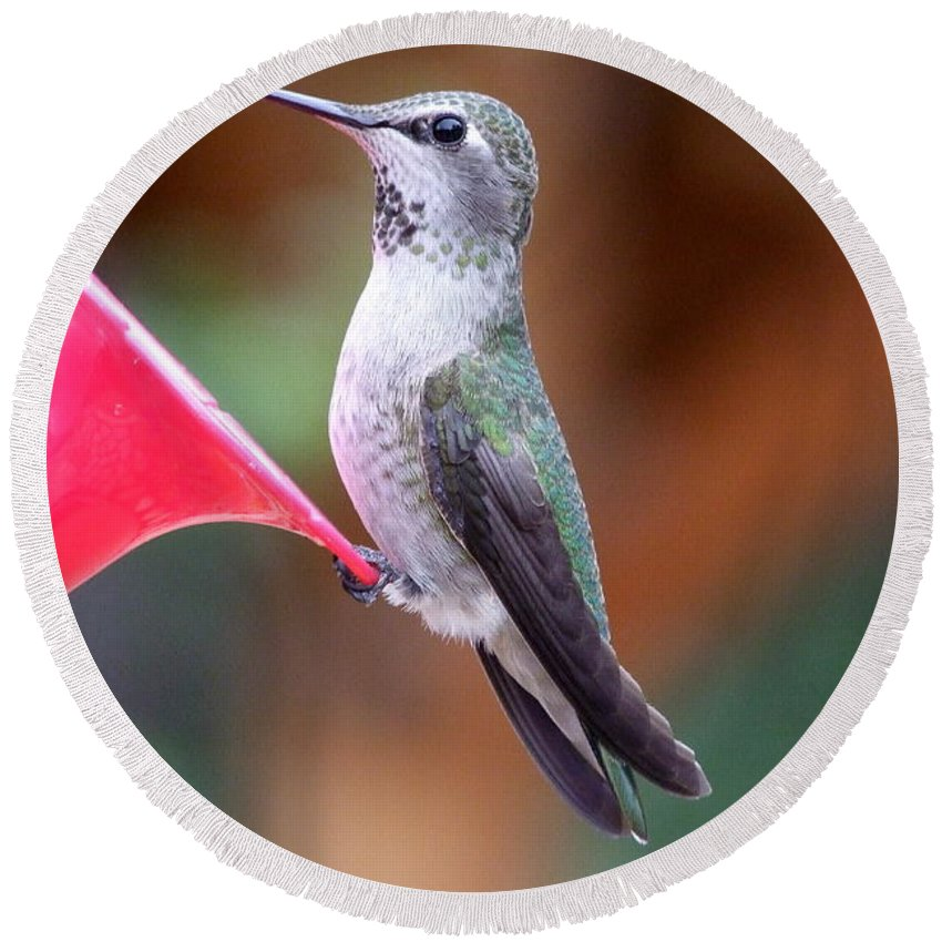 Green Round Beach Towel featuring the photograph Hummingbird 1 by Mary Deal