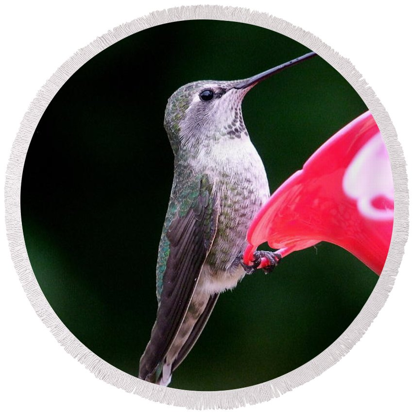 Red Round Beach Towel featuring the photograph Hummingbird 23 by Mary Deal