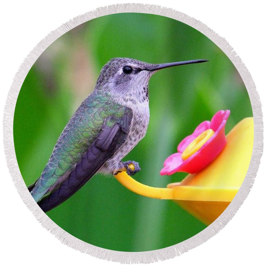 Green Round Beach Towel featuring the photograph Hummingbird 32 by Mary Deal