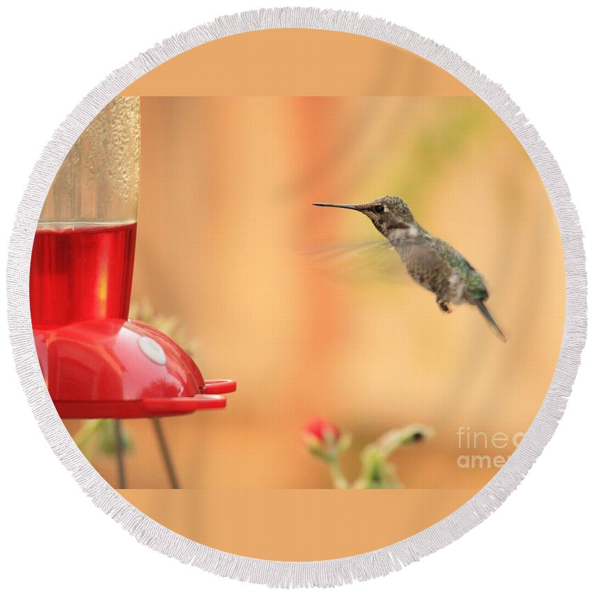 Hummingbird Round Beach Towel featuring the photograph Hummingbird And Feeder by Carol Groenen