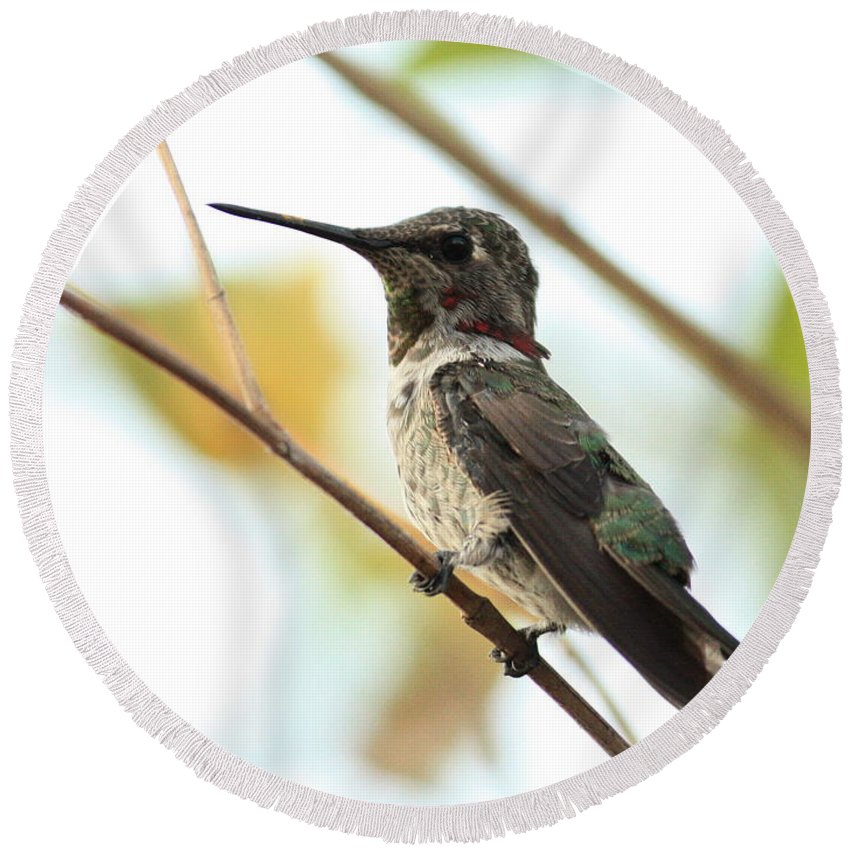 Hummingbird Round Beach Towel featuring the photograph Hummingbird Between Branches by Carol Groenen