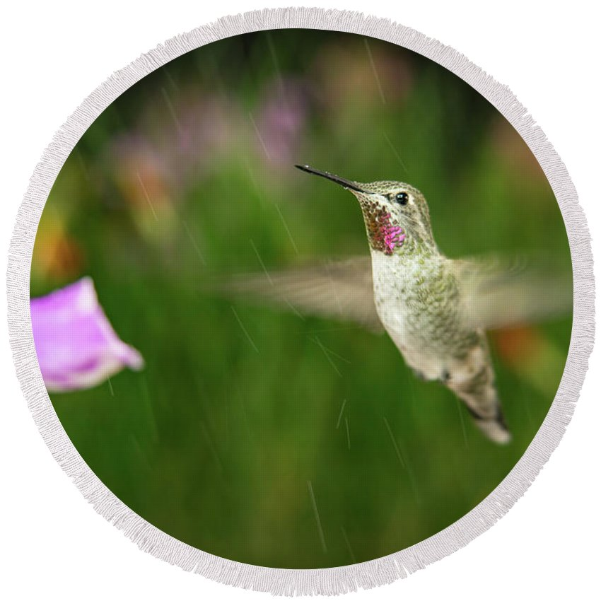 Animal Round Beach Towel featuring the photograph Hummingbird Hovering In Rain by William Freebilly photography