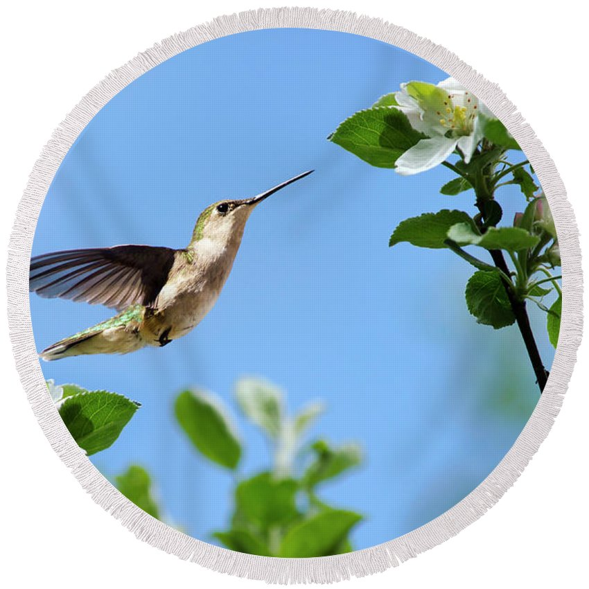 Hummingbird Round Beach Towel featuring the photograph Hummingbird Springtime by Christina Rollo
