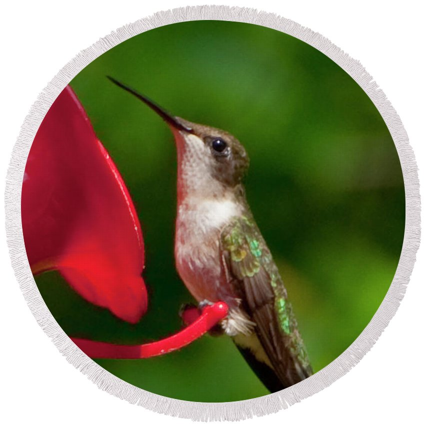 Photography Round Beach Towel featuring the photograph Hummingbird by Steven Natanson