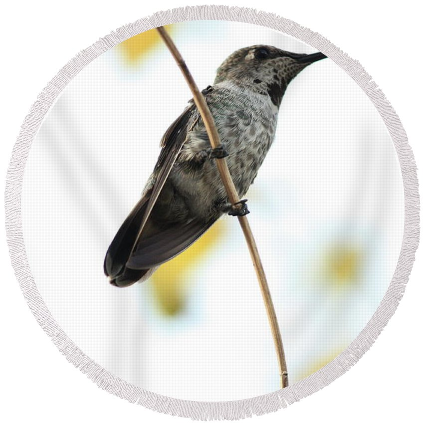 Hummingbird Round Beach Towel featuring the photograph Hummingbird Tongue by Carol Groenen