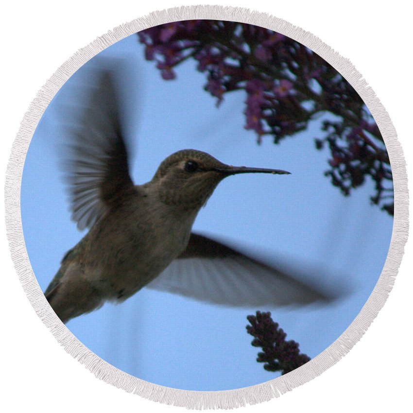 Hummingbird Round Beach Towel featuring the photograph Hummingbird Wings And Butterfly Bush by Carol Groenen