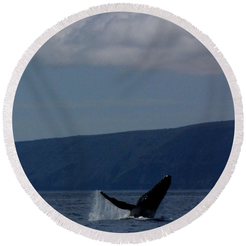 Whale Round Beach Towel featuring the photograph Humpback Whale by Sarah Houser