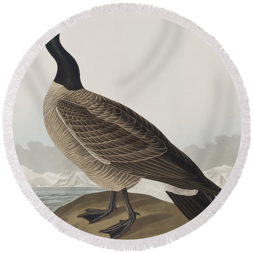 Goose Round Beach Towel featuring the painting Hutchins's Barnacle Goose by John James Audubon