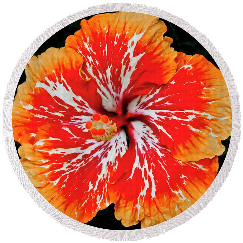 Flower Round Beach Towel featuring the photograph Hybrid Hibiscus II Maui Hawaii by Jim Cazel