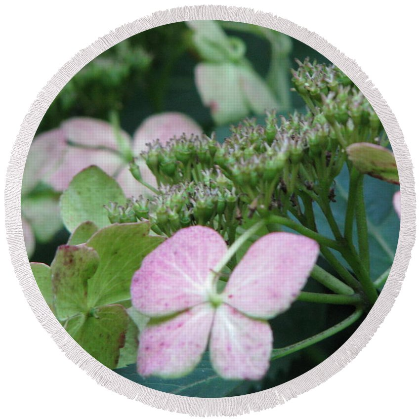 Hydrangea Round Beach Towel featuring the photograph Hydrangea by Amanda Barcon