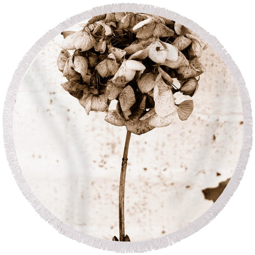 Sepia Round Beach Towel featuring the photograph Hydrangea Interest by Trish Hale
