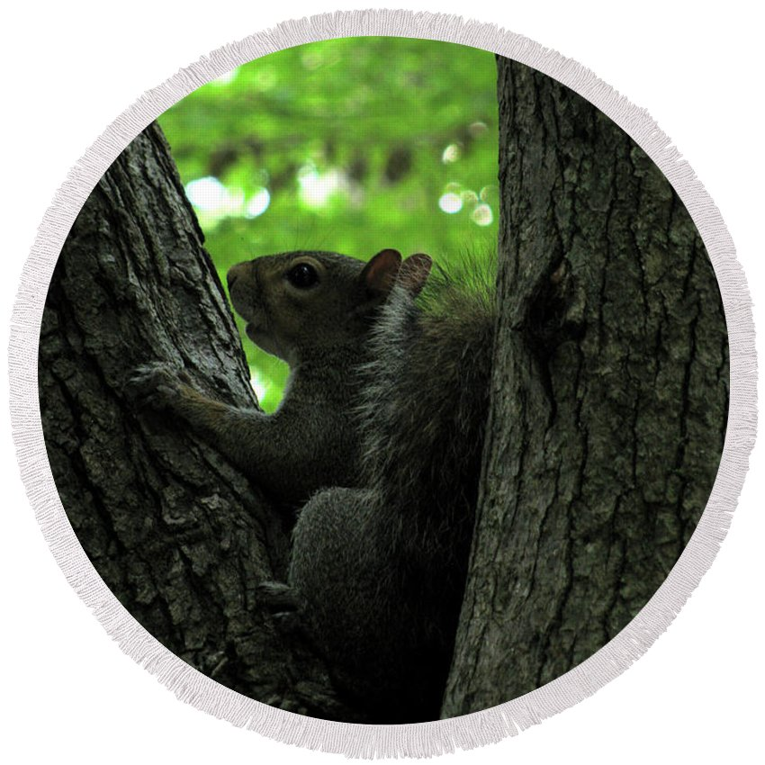 Squirrel Round Beach Towel featuring the photograph I Am Here by Donna Brown