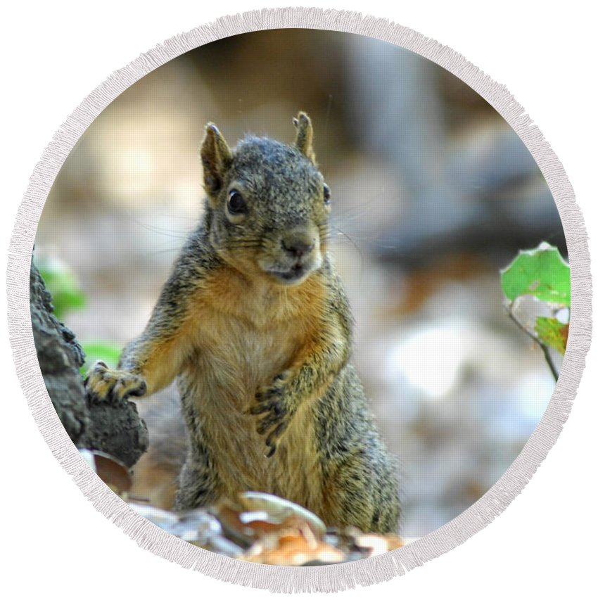 Squirrel Round Beach Towel featuring the photograph I Ate Too Many Nuts by Donna Blackhall