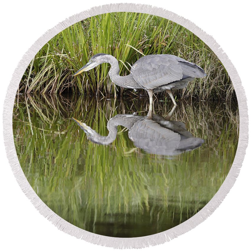 Heron Round Beach Towel featuring the photograph I Can See My Reflection by Deborah Benoit
