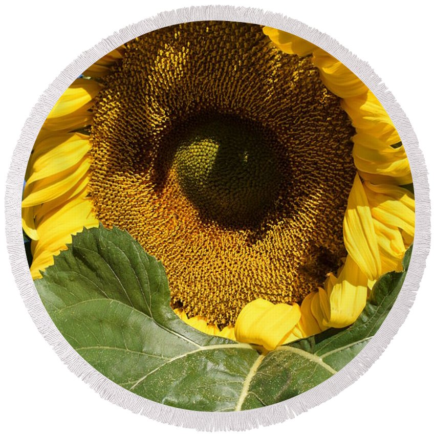 Sunflower Round Beach Towel featuring the photograph I Got An Eye On You by Jimmy Chuck Smith