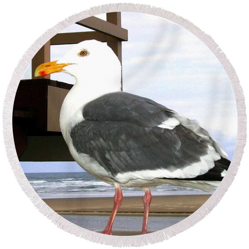Seagull Round Beach Towel featuring the photograph I Hope Lunch Is Ready by Will Borden