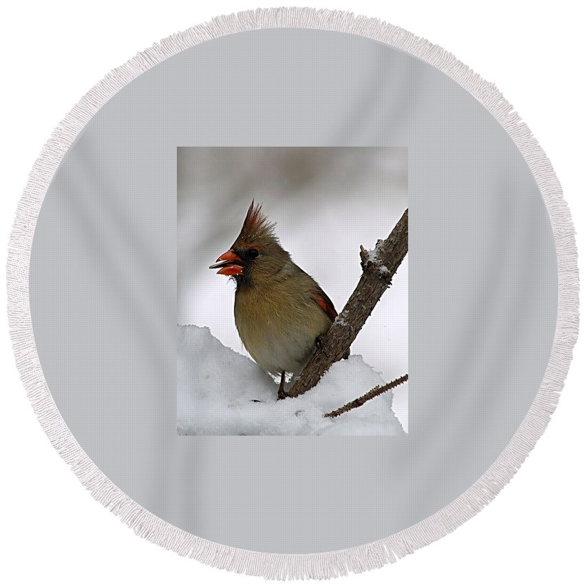 Bird Round Beach Towel featuring the photograph I Love Seeds by Gaby Swanson
