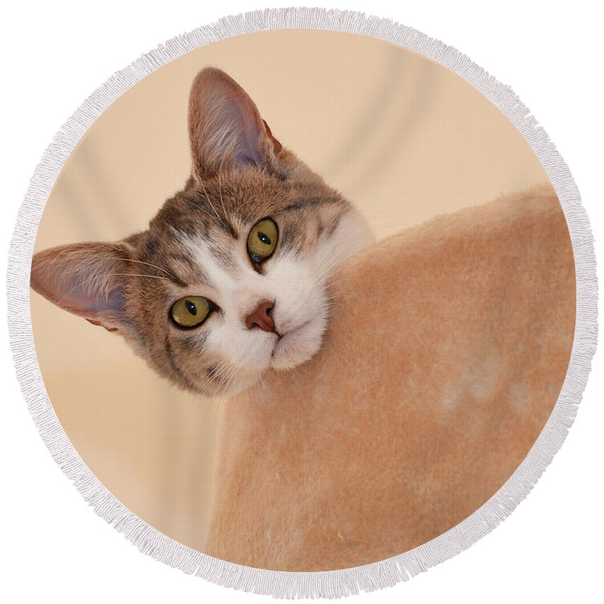 Beige Round Beach Towel featuring the photograph I See You by Kim Wilder Hinson