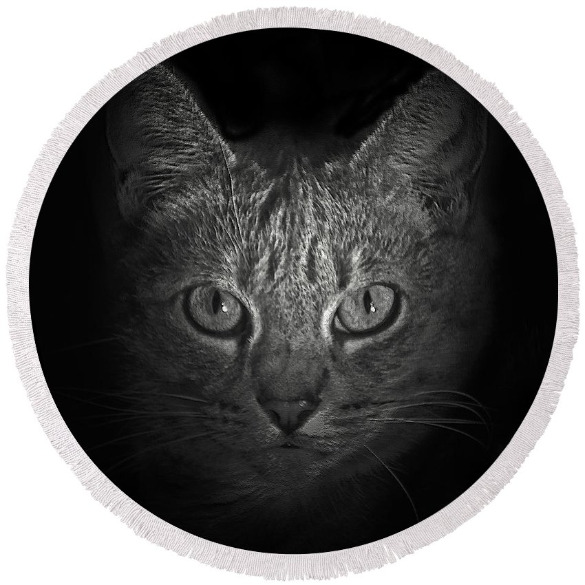 Cats Round Beach Towel featuring the photograph I Want Something by Guy Ciarcia