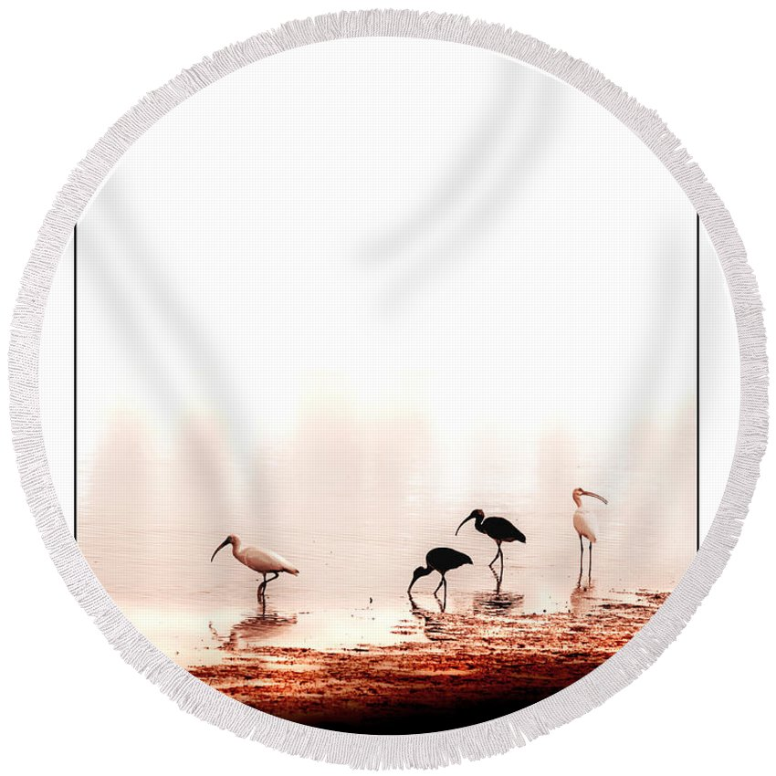Ibis Round Beach Towel featuring the photograph Ibis by Mal Bray