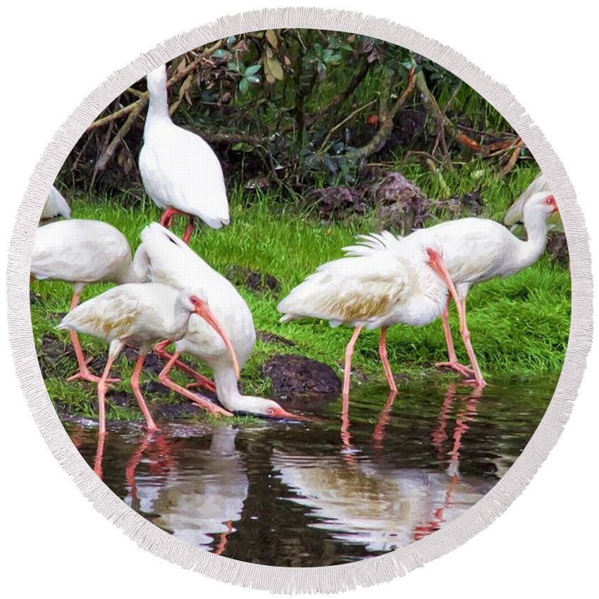 Alicegipsonphotographs Round Beach Towel featuring the photograph Ibis Reflections by Alice Gipson