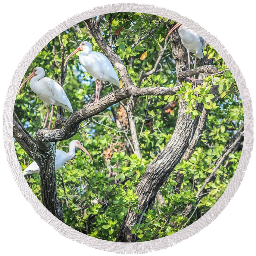 Florida Round Beach Towel featuring the photograph Ibises In A Tree by Claudia M Photography