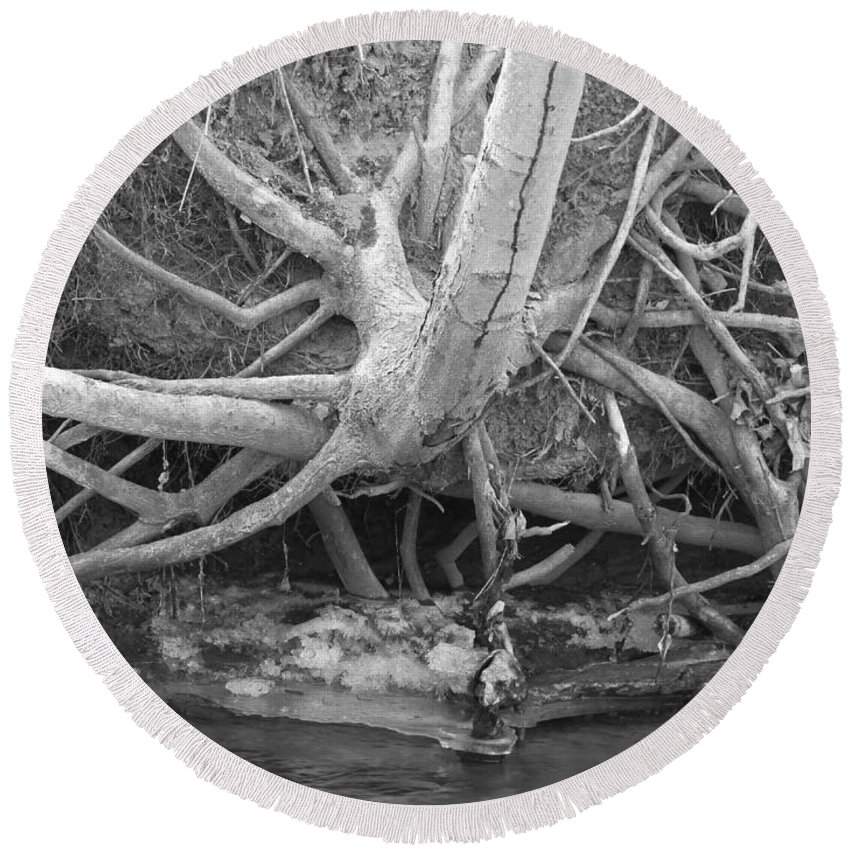 Bare Tree Roots Round Beach Towel featuring the photograph Twisted Roots by Sandra Church