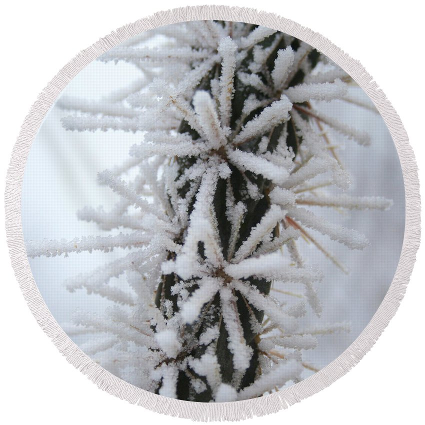 Ice Crystals Round Beach Towel featuring the photograph Icy Cactus by Ric Bascobert