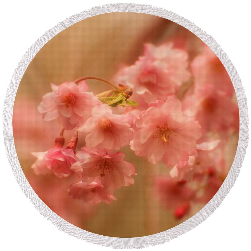 Cherry Blossom Trees Round Beach Towel featuring the photograph If Only For A Moment by Angie Tirado