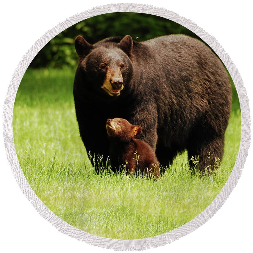 Black Bear Round Beach Towel featuring the photograph I'll Always Look Up To You by Lori Tambakis