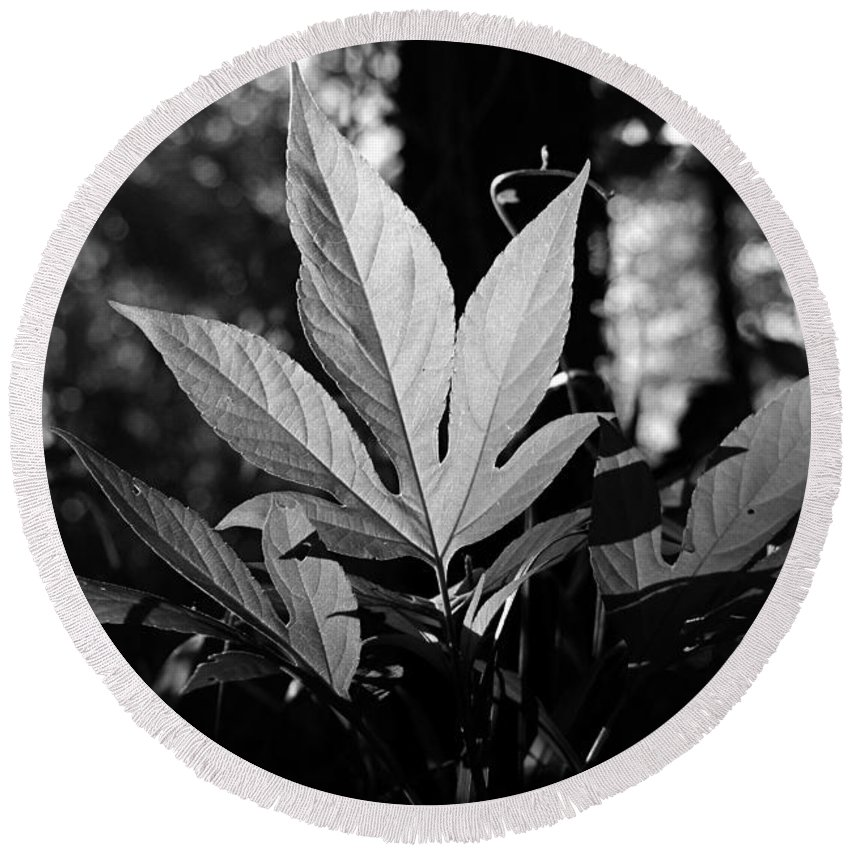 Greenery Round Beach Towel featuring the photograph Illuminated Leaf, Black And White by Katherine Nutt