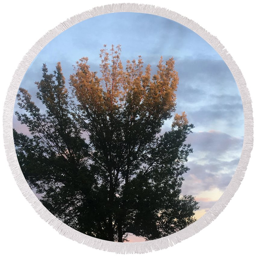 Sun Set Round Beach Towel featuring the photograph Illuminated Tree Top by Amy Lionheart