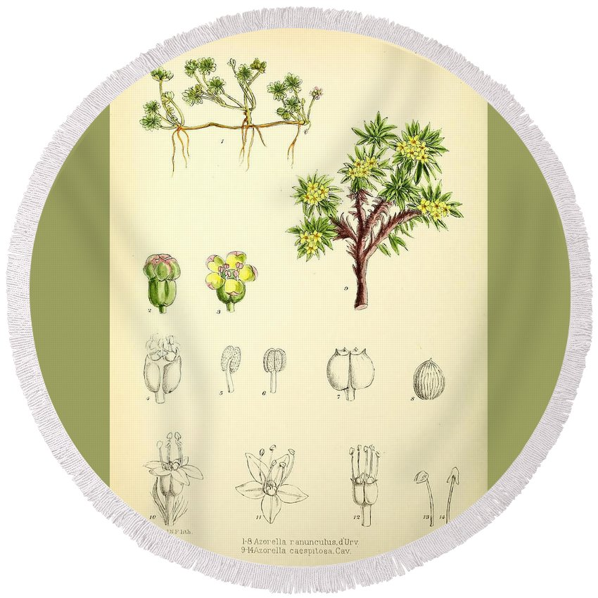 Illustrations Of The Flowering Plants And Ferns Of The Falkland Islands Round Beach Towel featuring the painting Illustrations Of The Flowering Plants And Ferns Of The Falkland by MotionAge Designs