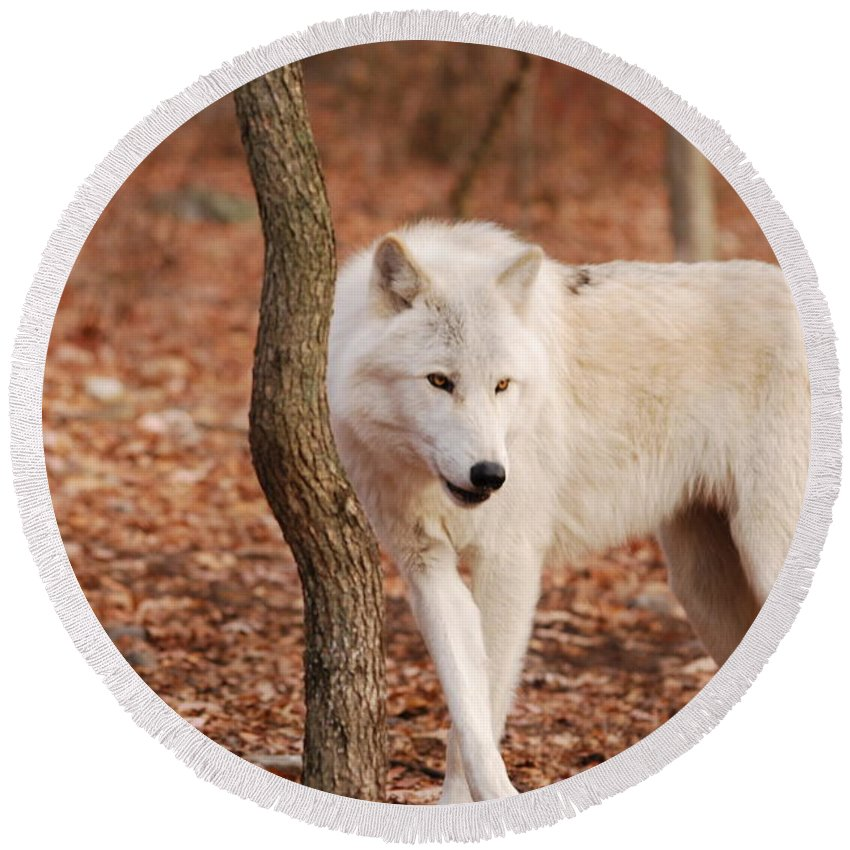 Wolf Round Beach Towel featuring the photograph I'm A Wolf by Lori Tambakis
