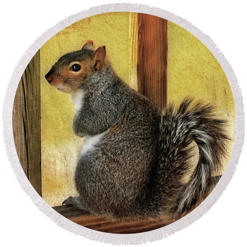 Squirrel Round Beach Towel featuring the photograph I'm Sorry by Lois Bryan