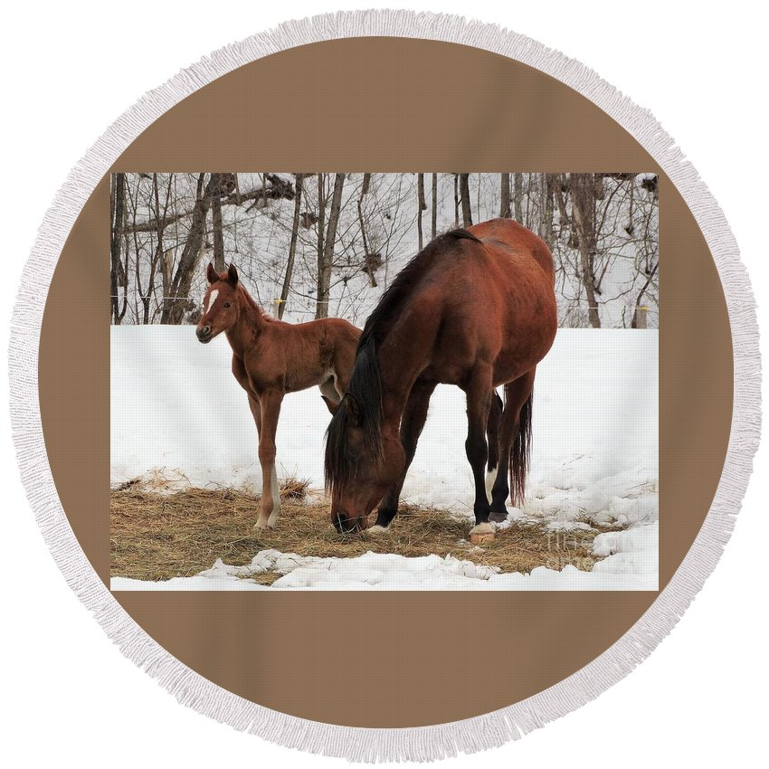 New Foal Vermont Farming Horses Round Beach Towel featuring the photograph I'm The Baby by Karen Velsor