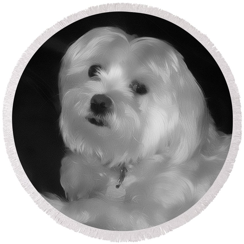 Dog Round Beach Towel featuring the digital art I'm The One For You by Kathy Tarochione