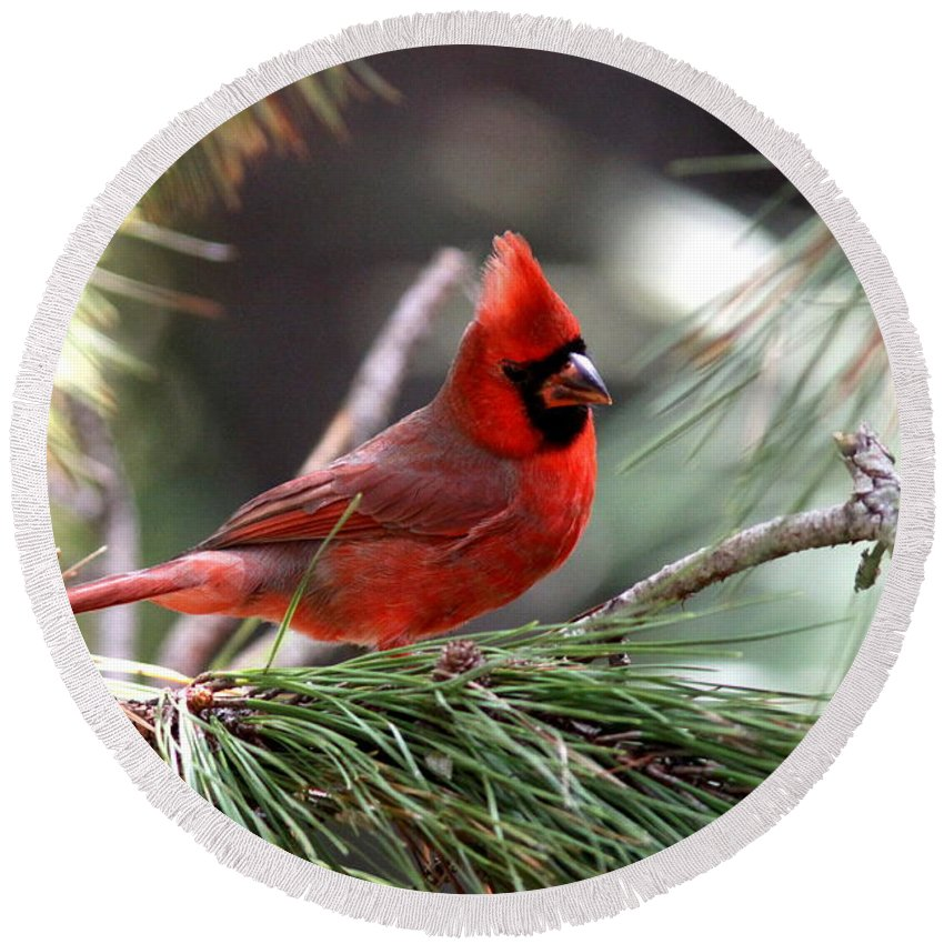 Northern Cardinal Round Beach Towel featuring the photograph Img_0565-004 - Northern Cardinal by Travis Truelove
