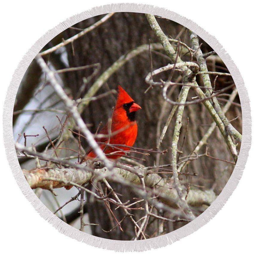 Northern Cardinal Round Beach Towel featuring the photograph Img_0806 - Northern Cardinal by Travis Truelove