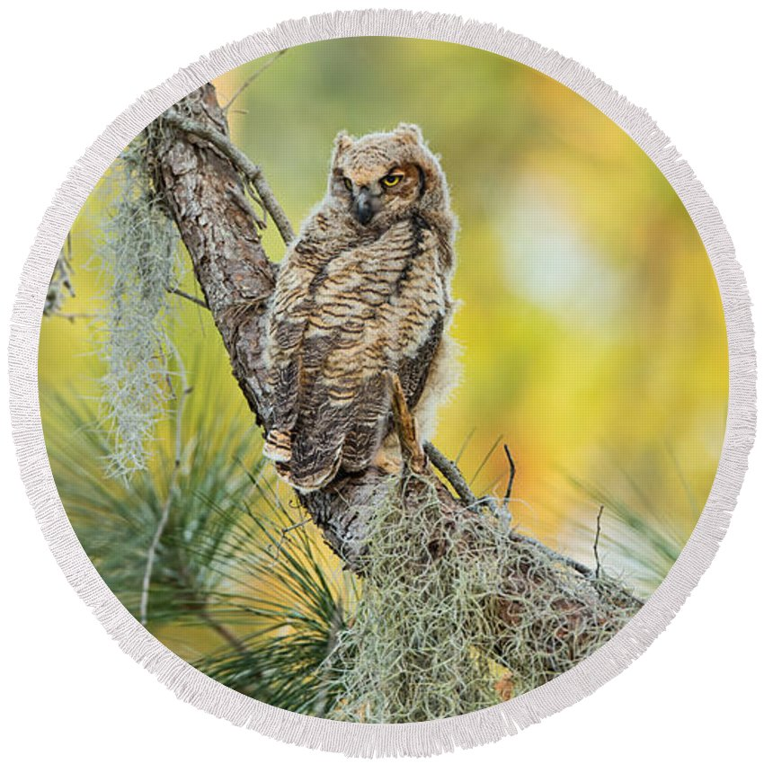 David Eppley Round Beach Towel featuring the photograph In Color by David Eppley