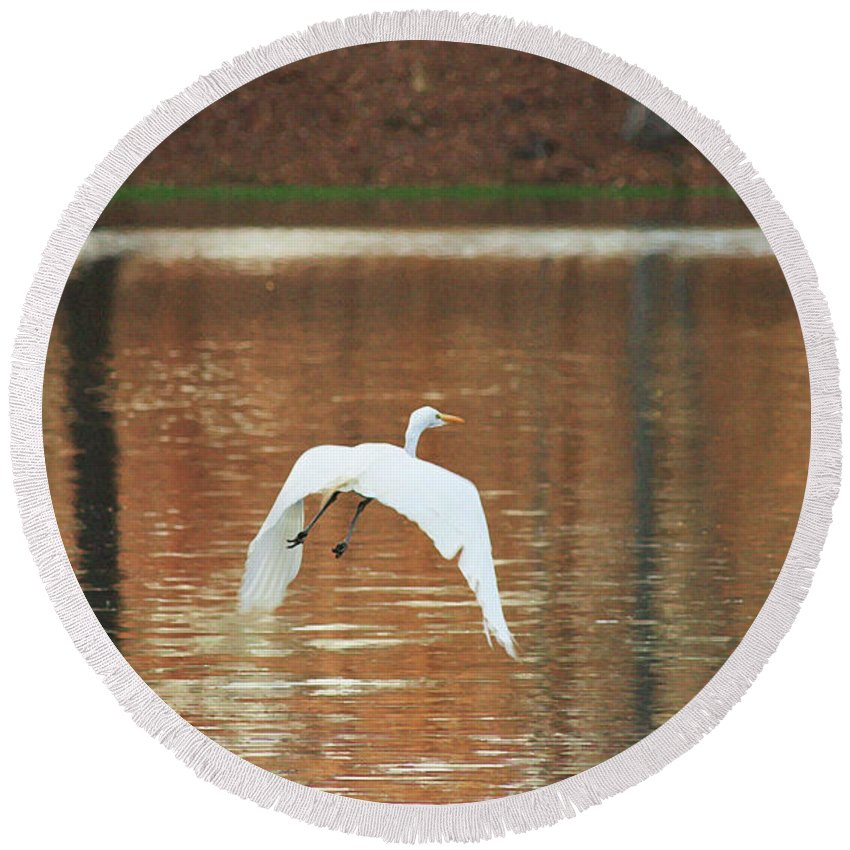 Heron Photograpy Round Beach Towel featuring the photograph In Flight by Kim Henderson