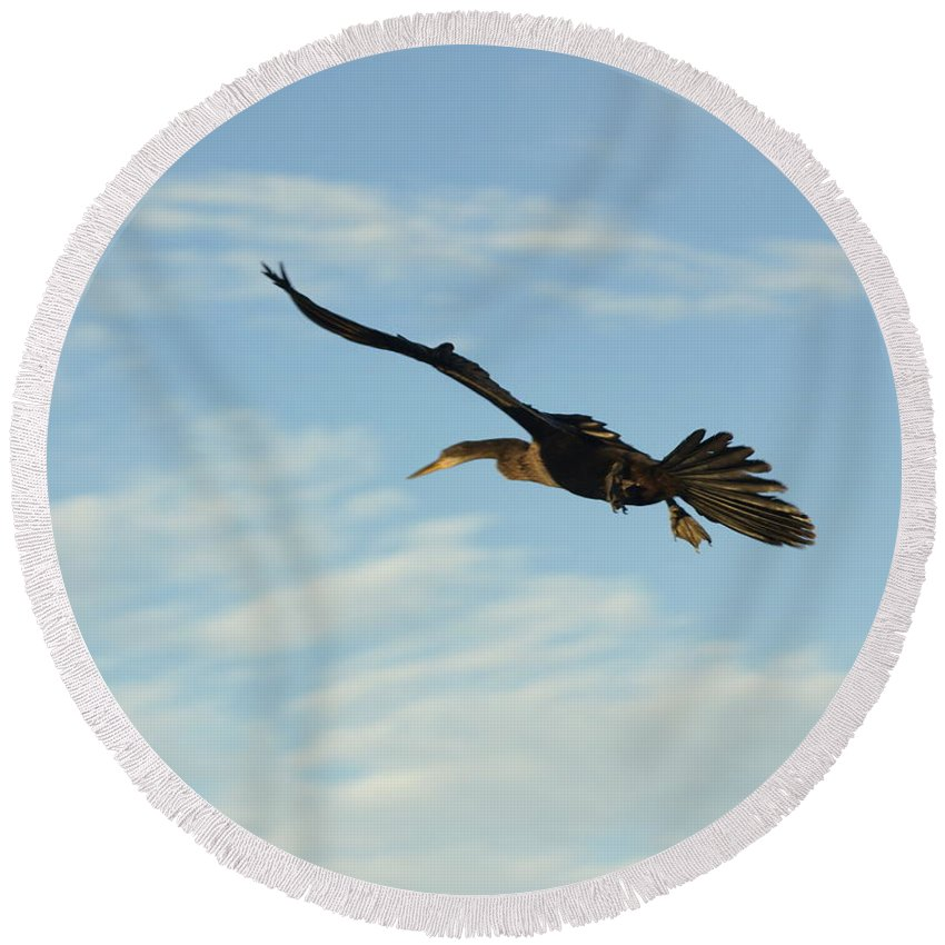 Birds Round Beach Towel featuring the photograph In Flight by Marty Koch