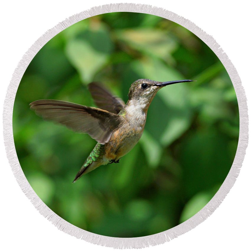 Hummingbird Round Beach Towel featuring the photograph In Flight by Sandy Keeton
