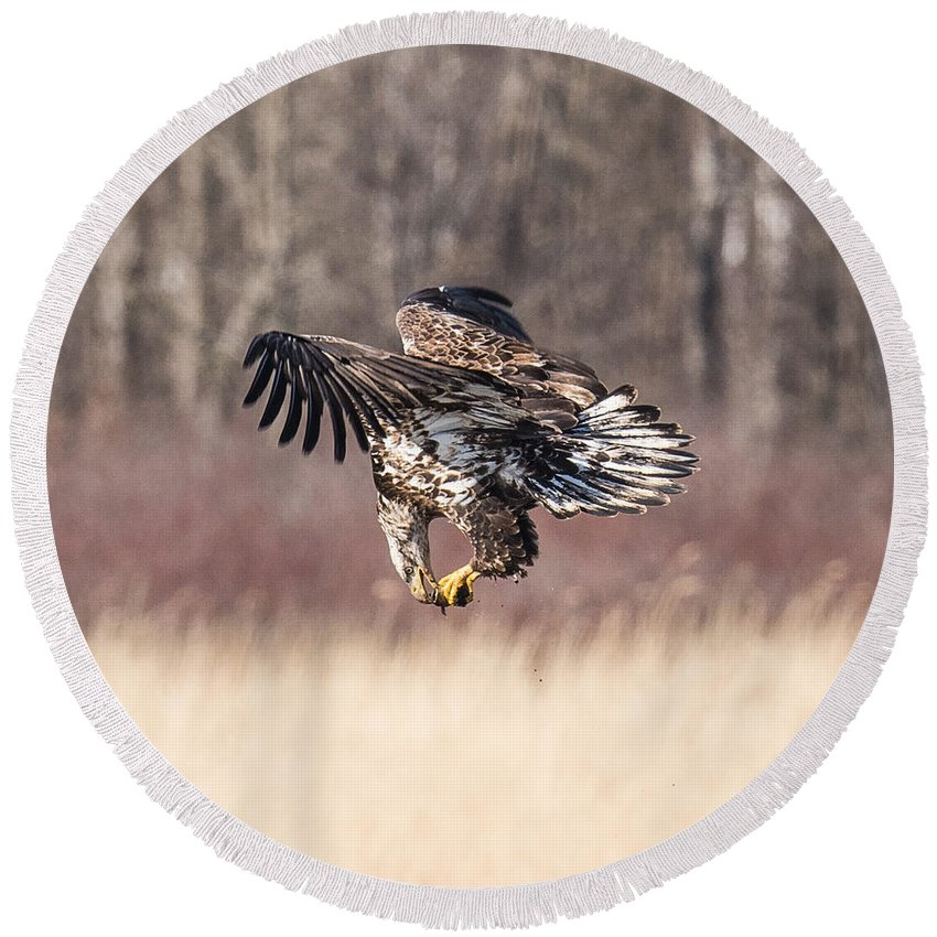 Bald Eagle Round Beach Towel featuring the photograph In Flight Snack by Paul Freidlund