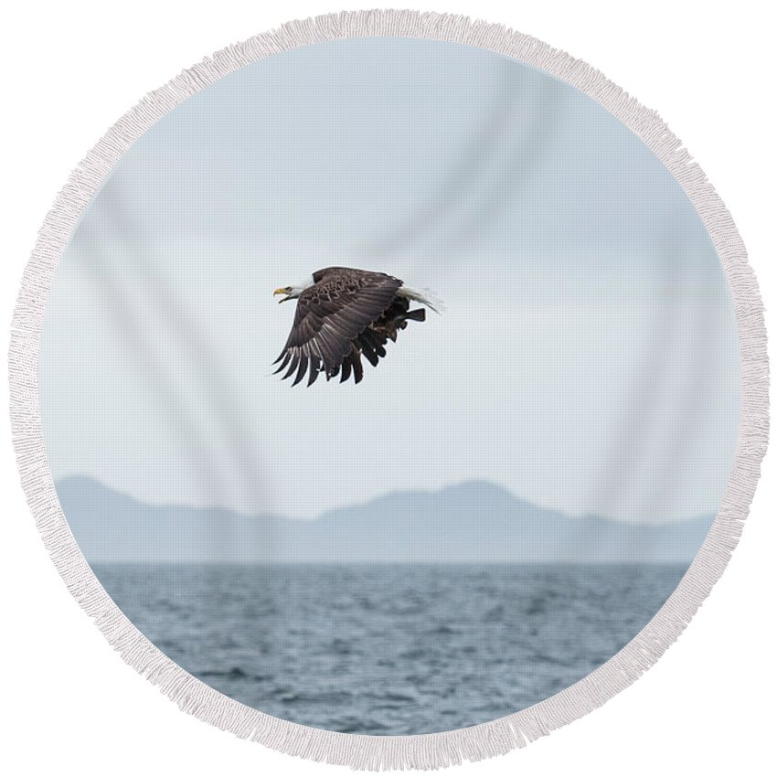 Nature Round Beach Towel featuring the photograph In Flight by Tom Rostron